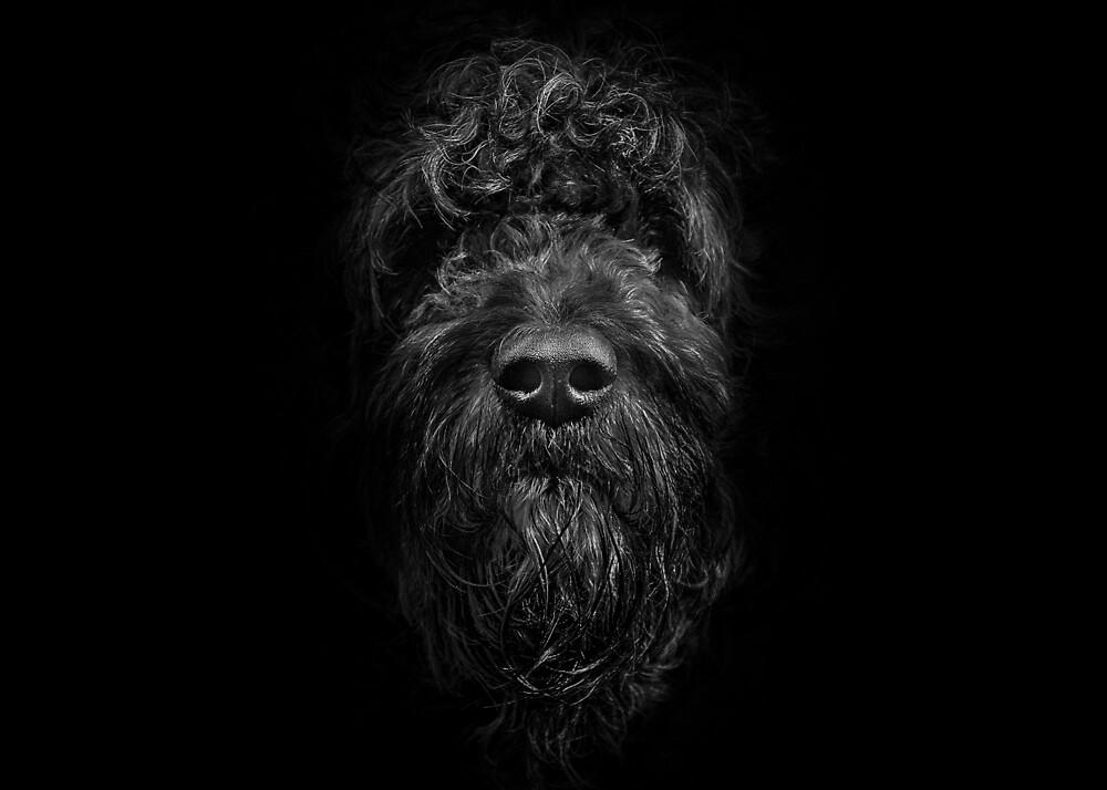 Ziggy Portrait No 2 by Brian Carson