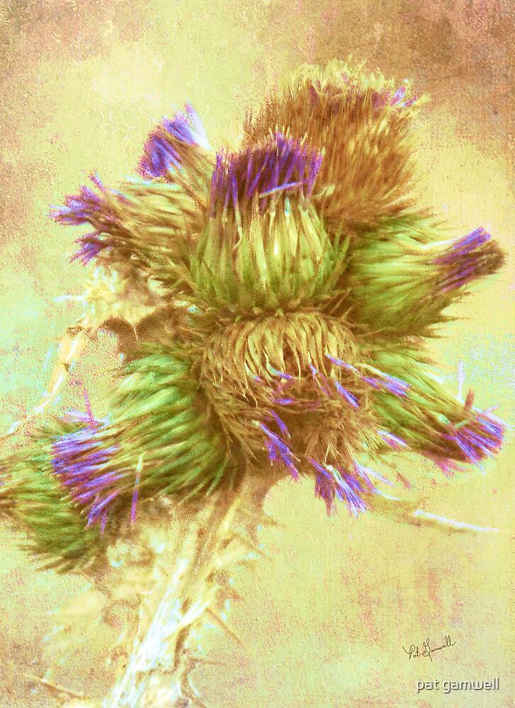 Flowering Thistles by pat gamwell
