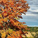 Fall Orange by Deborah  Benoit
