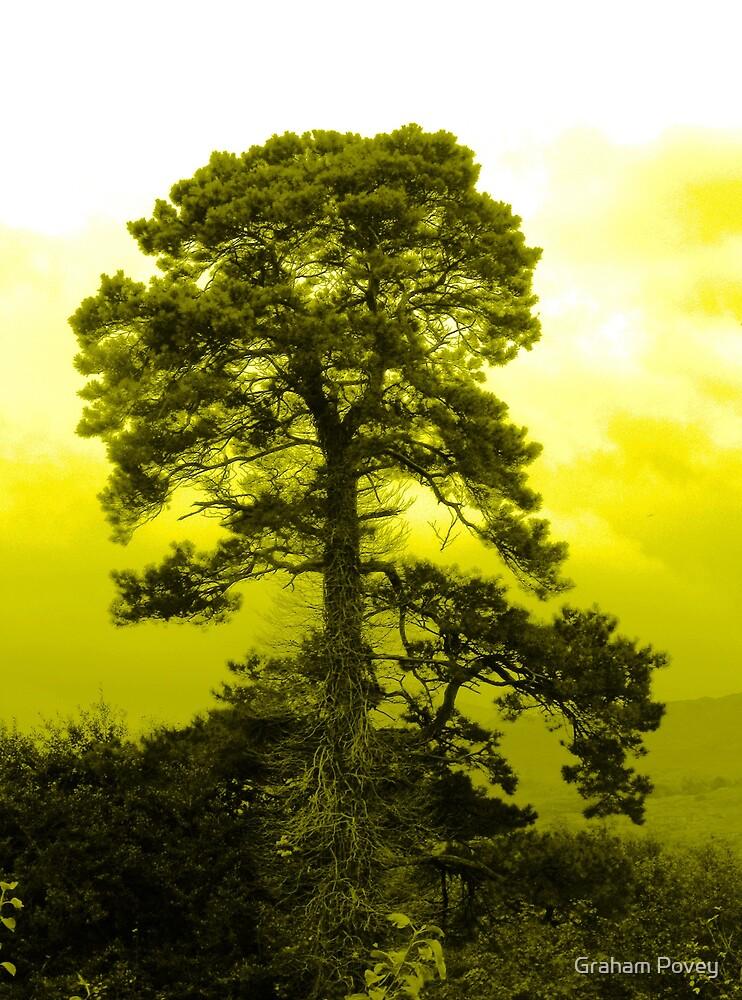 TreeBearded by Graham Povey