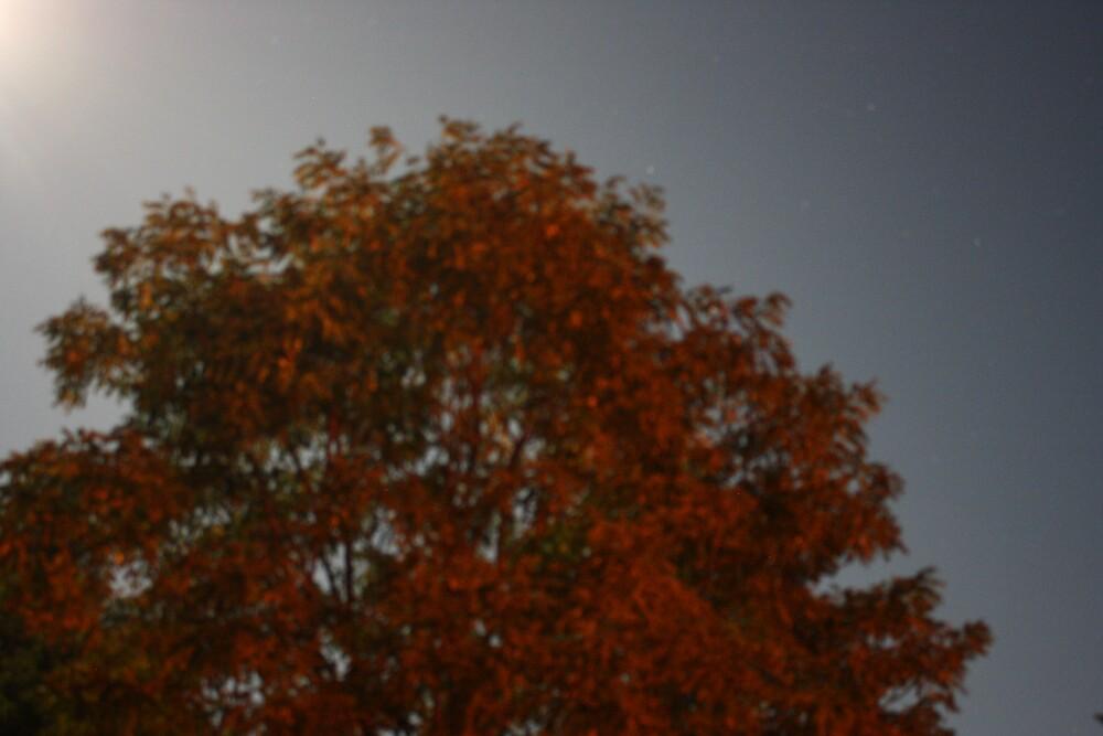 Starlit Tree by Devon Stewart