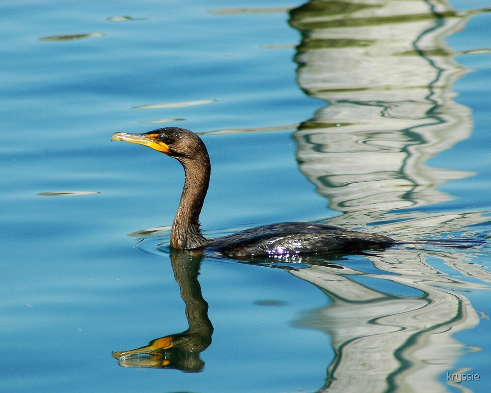 Cormorant of the Jersey Shore by kryssie