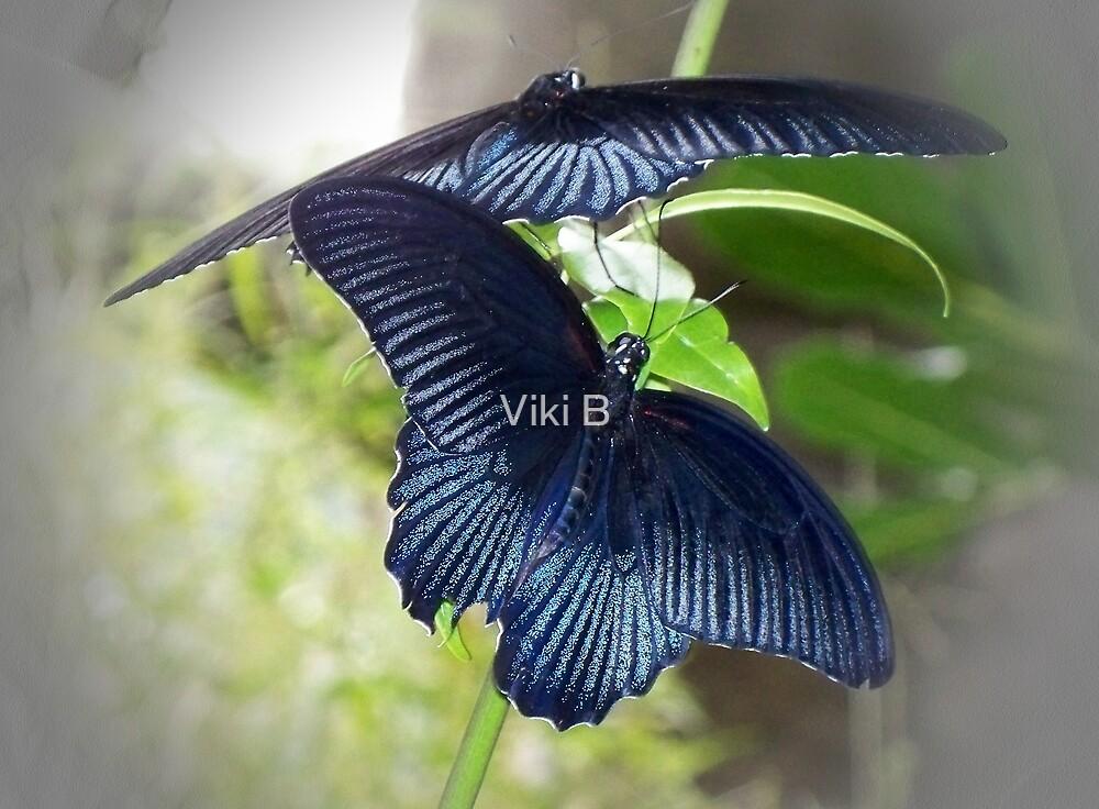 Blue Velvet by Viki B