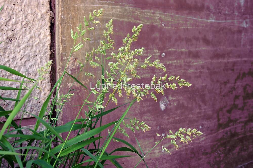weeds against wall by Lynne Prestebak