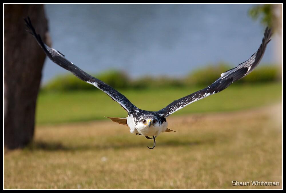 Duck! by Shaun Whiteman