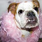 Pink boa by Jenni Atkins-Stair