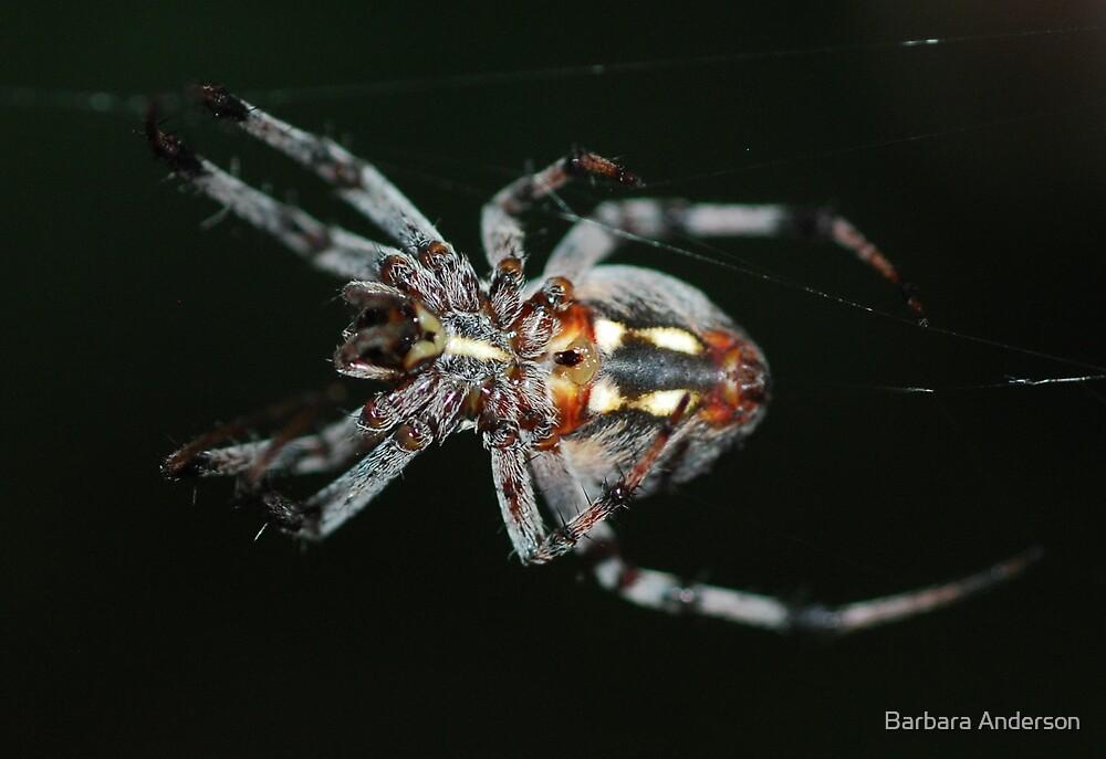 Oct spider by Barbara Anderson