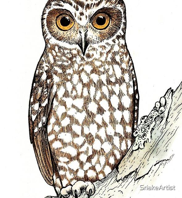 Boobook Owl by SnakeArtist