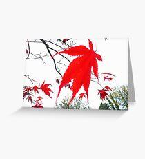 Acer Leaf. Grasmere. Greeting Card