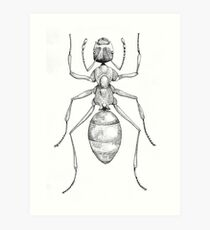 Acanthomyrmex Art Print