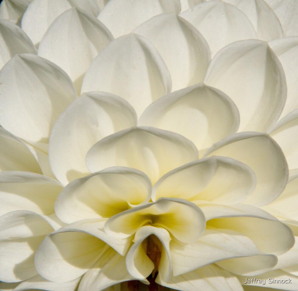 White Dahlia steps by Jeffrey  Sinnock