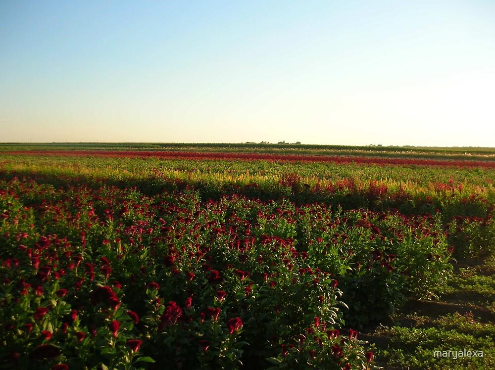 Midwestern Flower Farm by maryalexa
