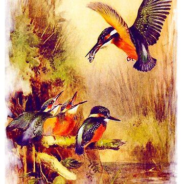 Kingfisher by Prepress