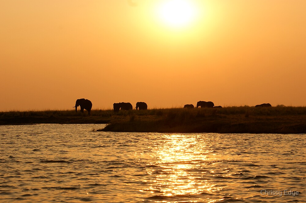 Elephants at sunsetm preparing to cross the water. by Chrissy Edye