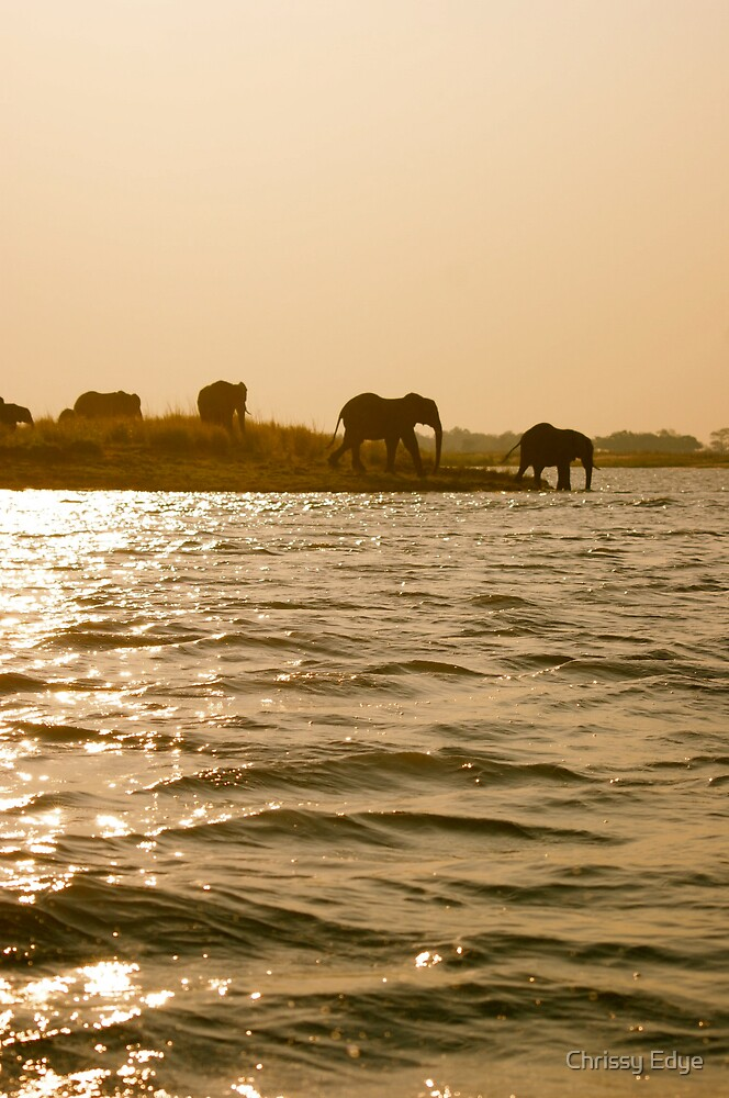 Elephants crossing the water at sunset by Chrissy Edye