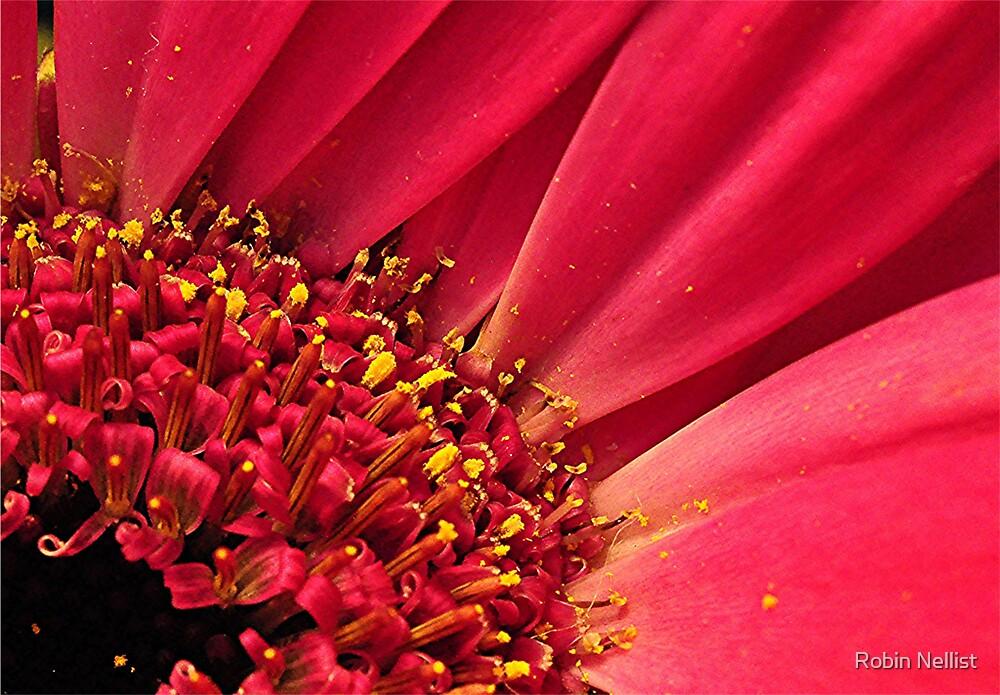 Pink Gerber by Robin Nellist