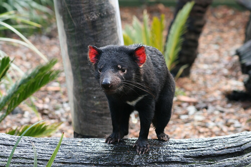 Tasmanian Devil by lulisa