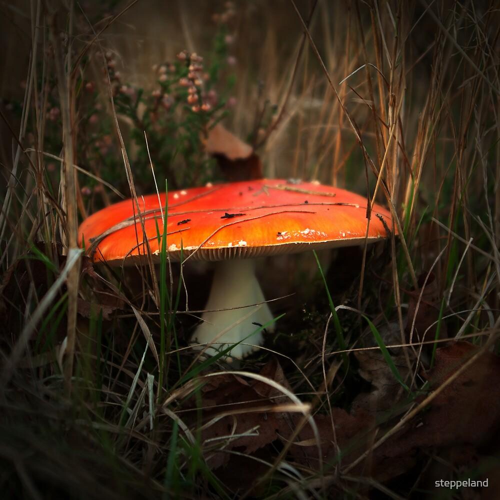Hidden orange beauty by steppeland