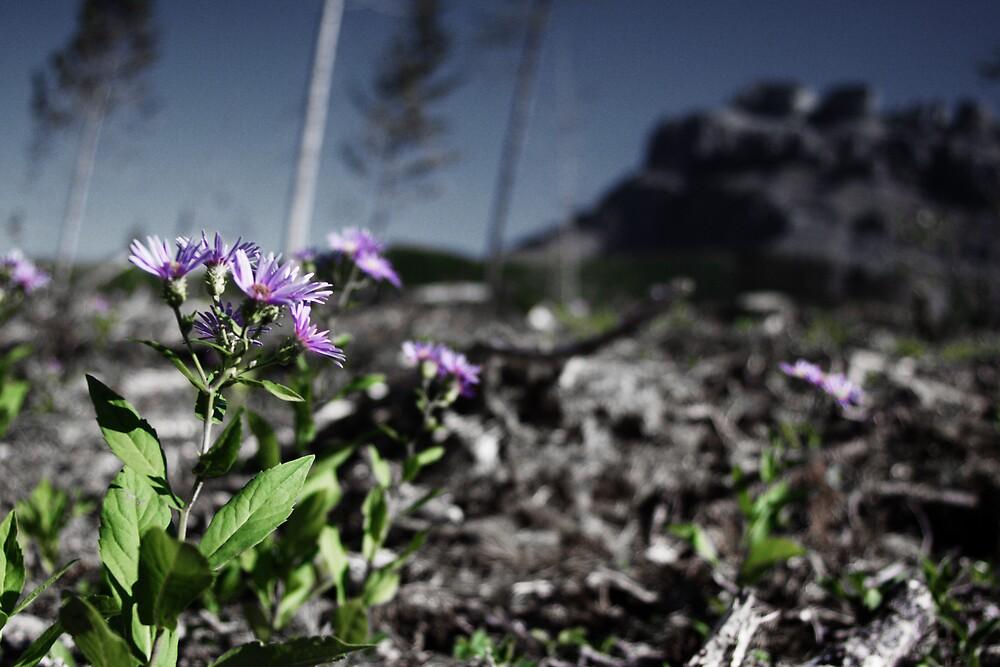 Purple Flowers by Logan Biesterfeldt