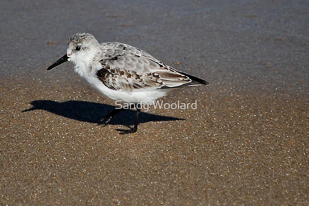 Strolling on Shore by Sandy Woolard