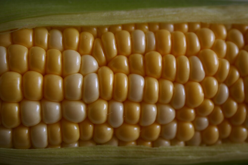 Corn by Daniel Rayfield