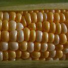 Corn by Daniel Rayfield
