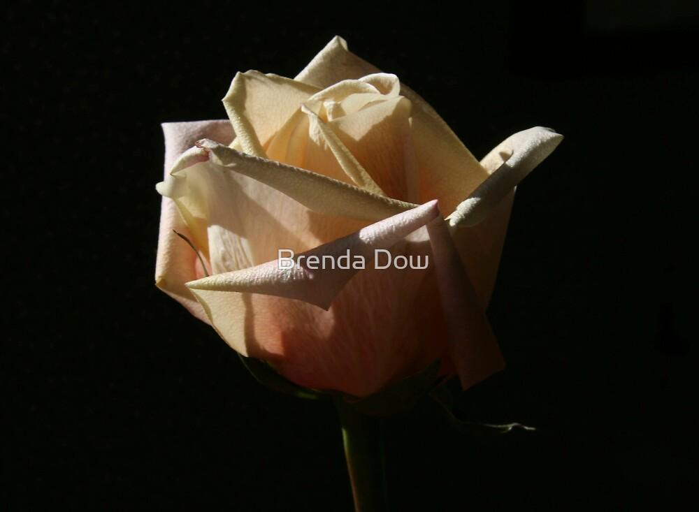 I Am Divine by Brenda Dow