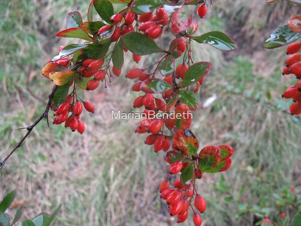 Juicy Fruity Berries by MarianBendeth
