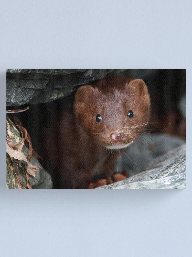 Alternate view of Sandy Whiskers, Soulful Eyes Canvas Print
