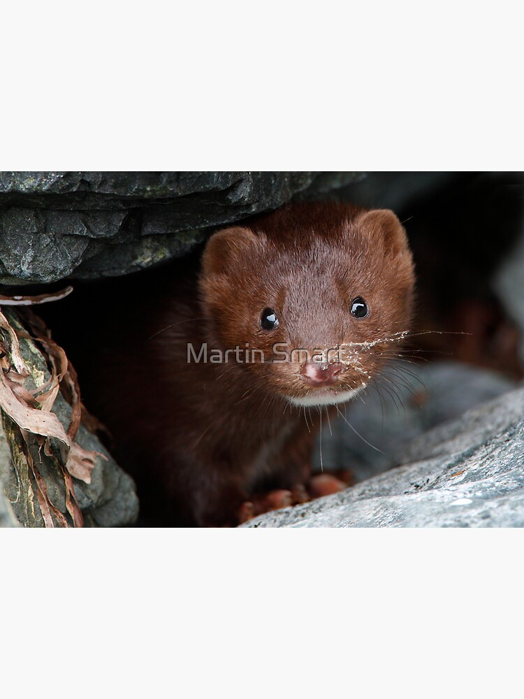 Sandy Whiskers, Soulful Eyes by MartinSmart
