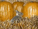 Autumn Bunny by Veronica Schultz