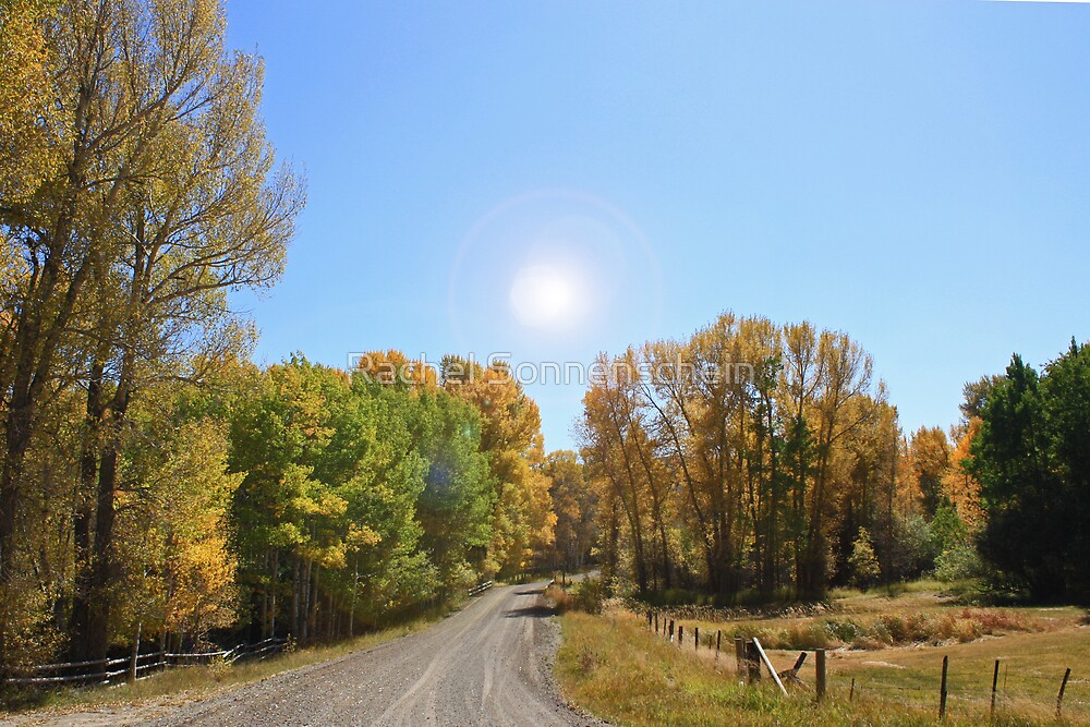 Into the sun, down the road, and into fall by Rachel Sonnenschein