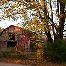Old Red in Autumn by Lisa G. Putman