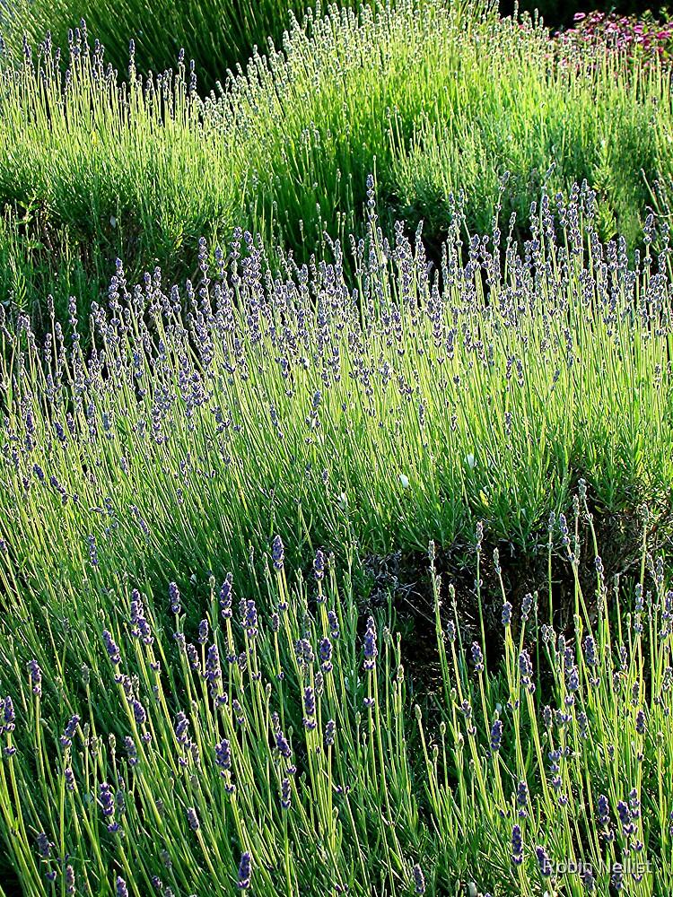 Lavender light by Robin Nellist