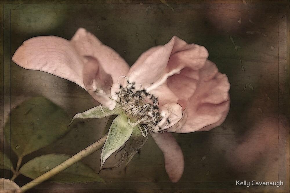 Lingering Beauty by Kelly Cavanaugh