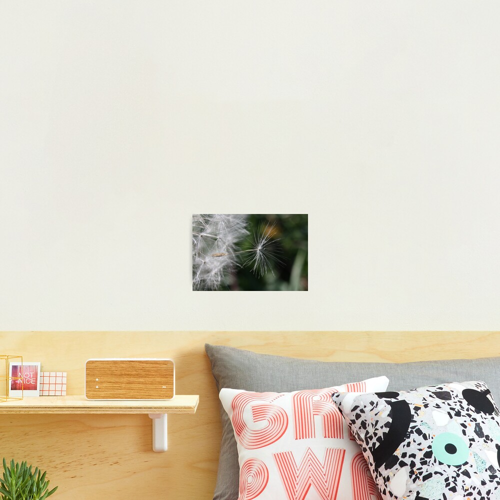 The outsider: leaving the nest Photographic Print