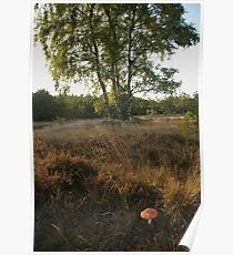 Near the birches  Poster