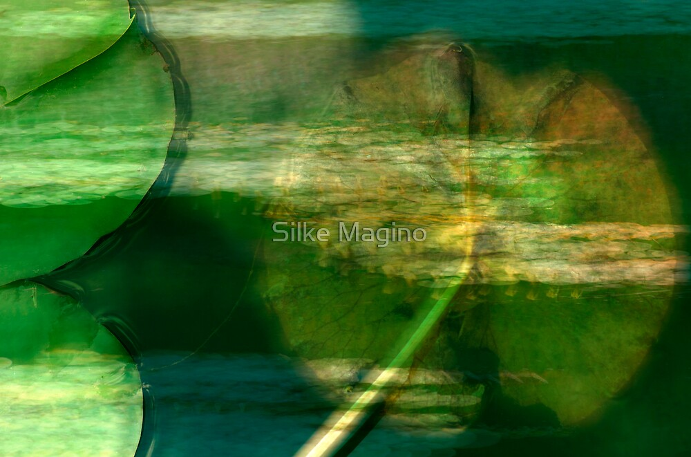 Water Lily Pond by Silke Magino