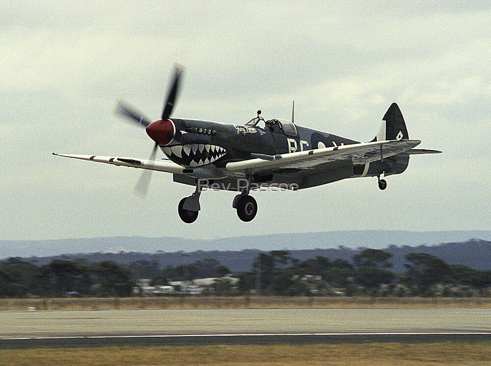 """Spitfire """"Grey Nurse"""" landing by Bev Pascoe"""