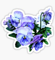 Group of Purple Pansies and Leaves Sticker
