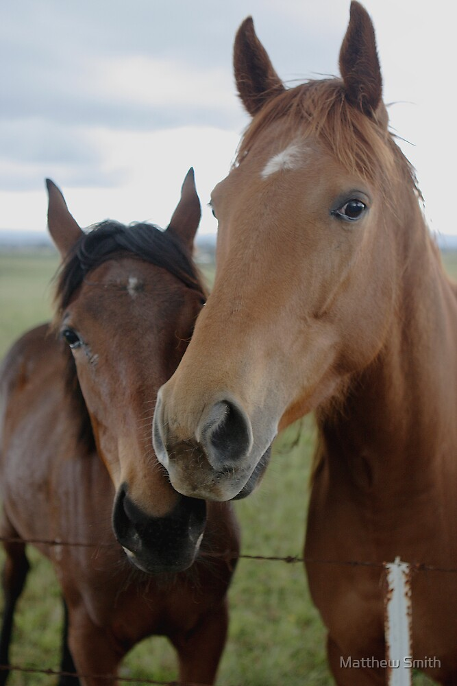 Two Horses by Matthew Smith