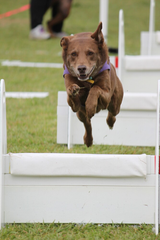 FLYball by KathleenS