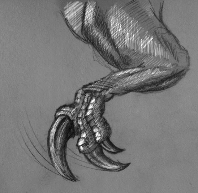 Arm of Australovenator wintonensis by Dana Sibera