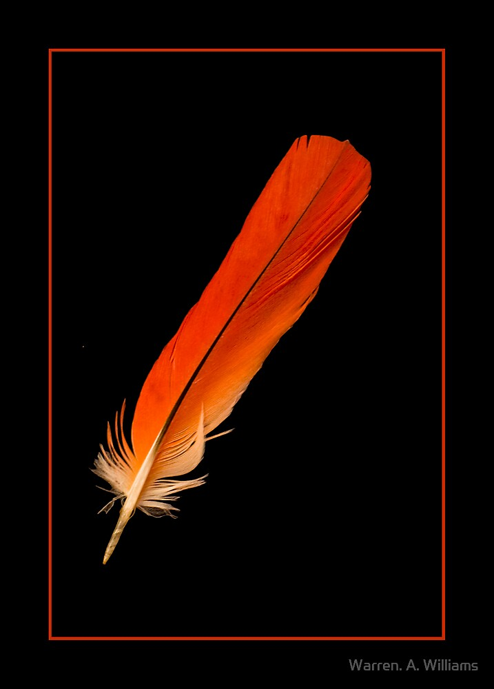 The Feather by Warren. A. Williams