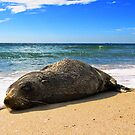 Seal by JuliaKHarwood