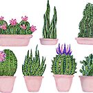 Handdrawn succulents by Maria Nazarian