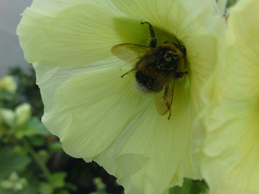 Bizzy bee. by melodie