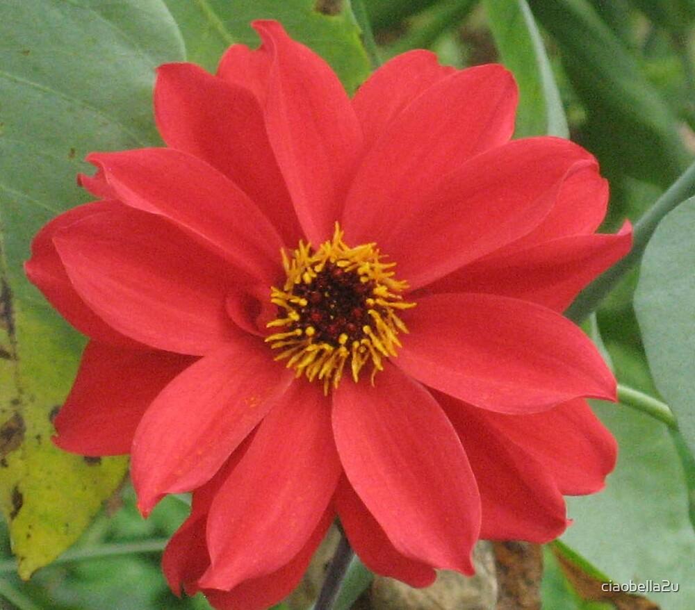 Flower Power by ciaobella2u