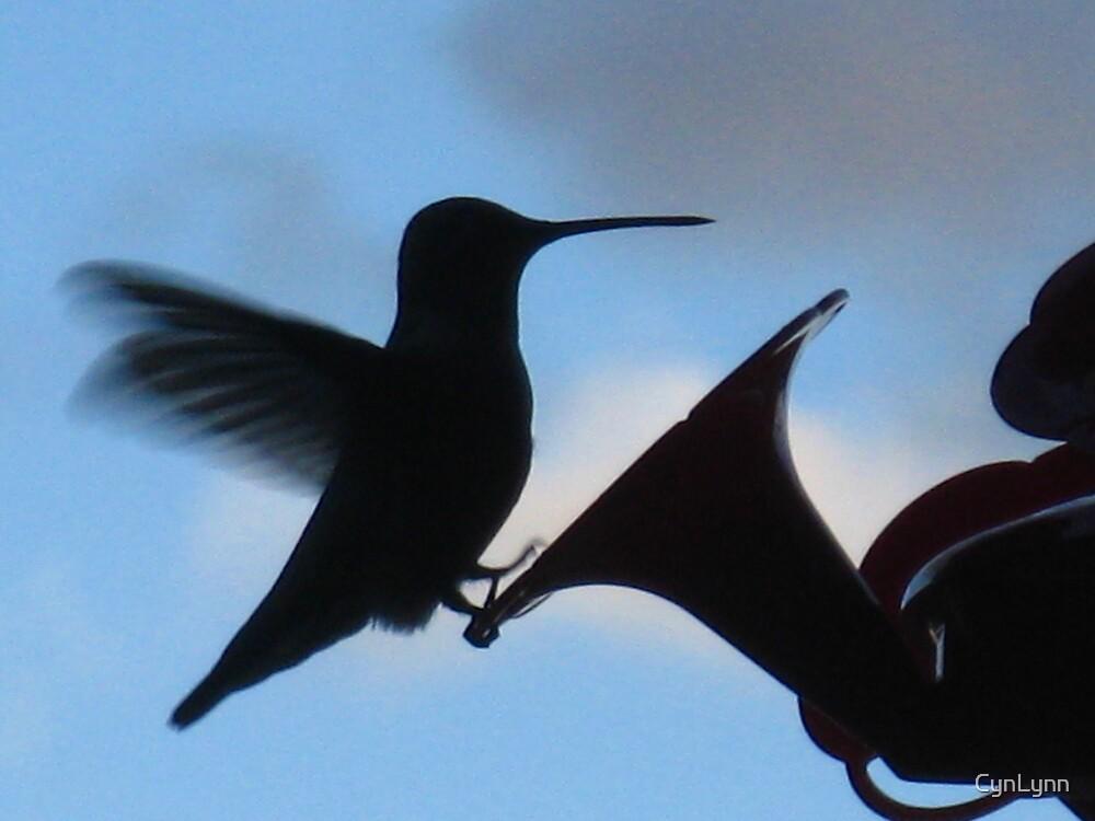 Humming Bird Silhouette by CynLynn