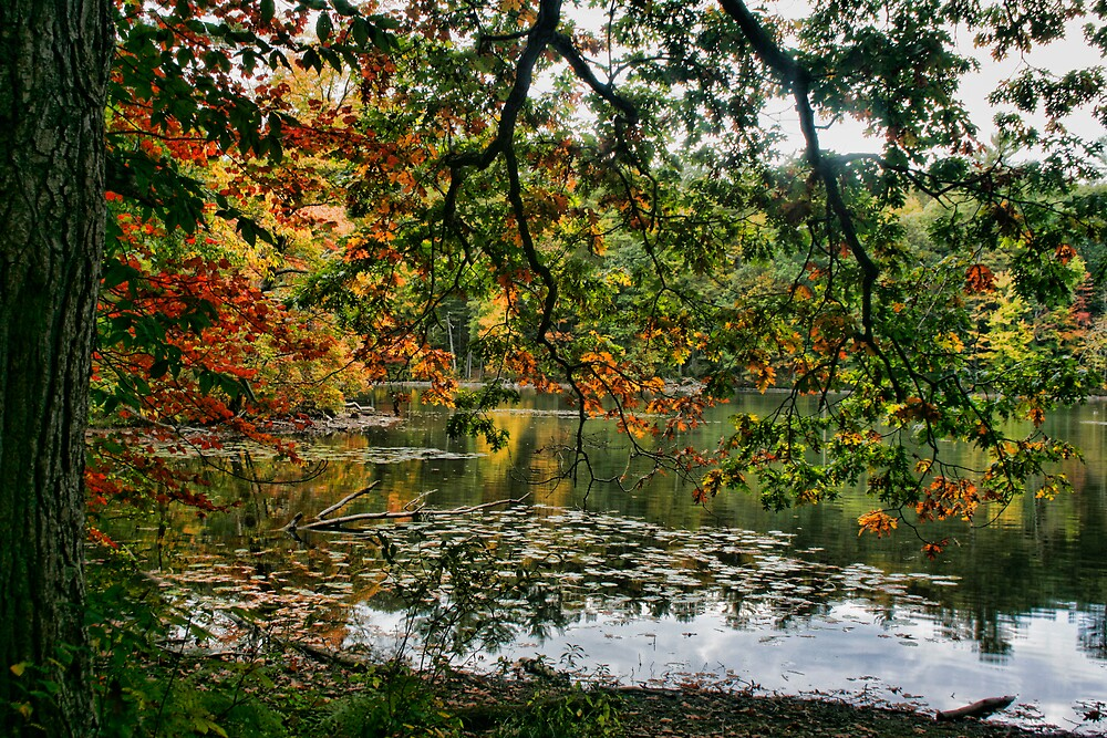 Fall Leaves by GPMPhotography